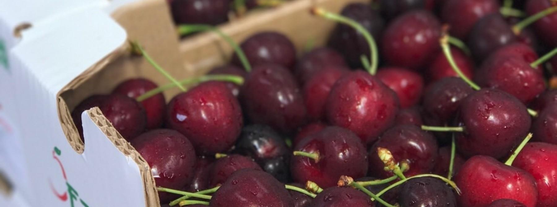 τα ποιοτικότερα φρούτα
